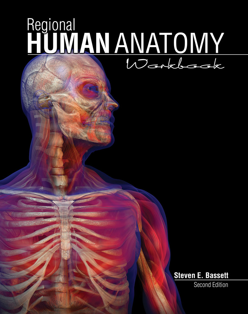 Regional Human Anatomy Workbook Higher Education