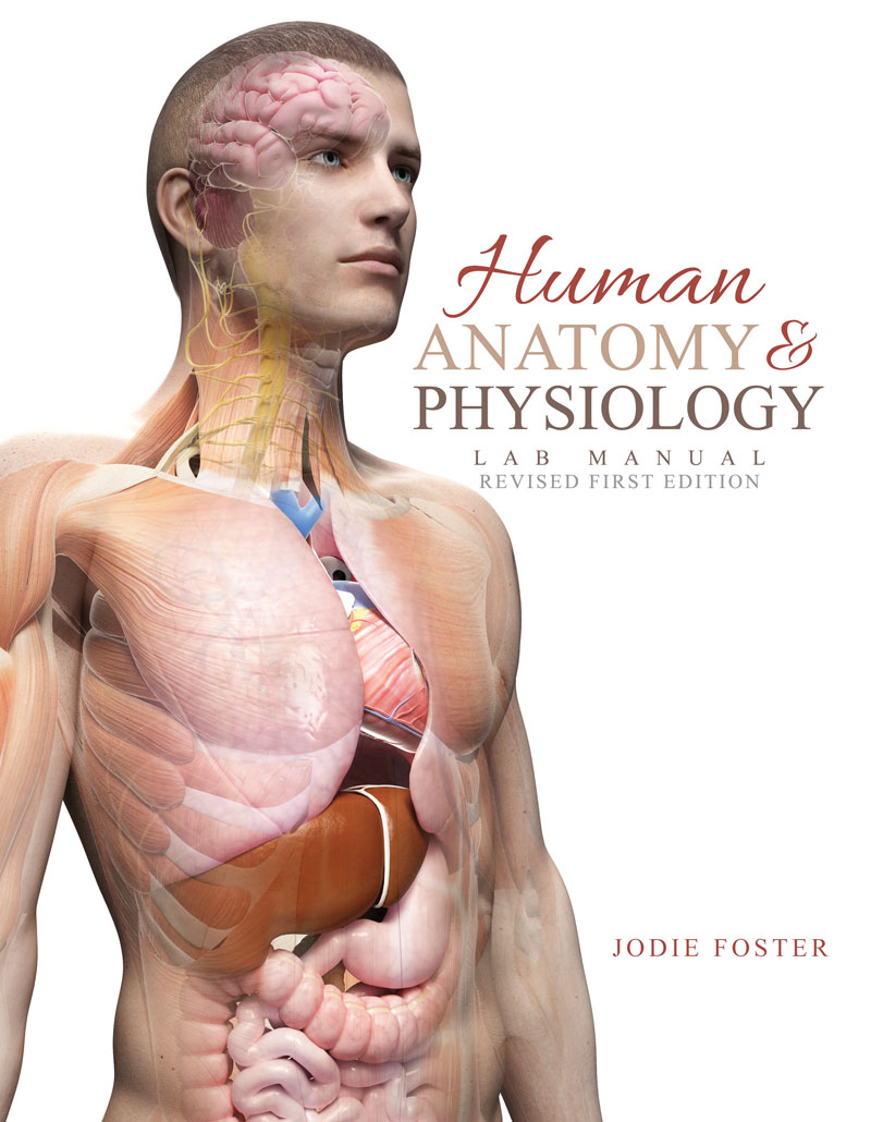 human physiology and health coursework The national health service (nhs) - specialist areas include cardiac sciences, audiology, neurophysiology, critical care science, respiratory physiology, sleep physiology and gastrointestinal (gi) physiology.