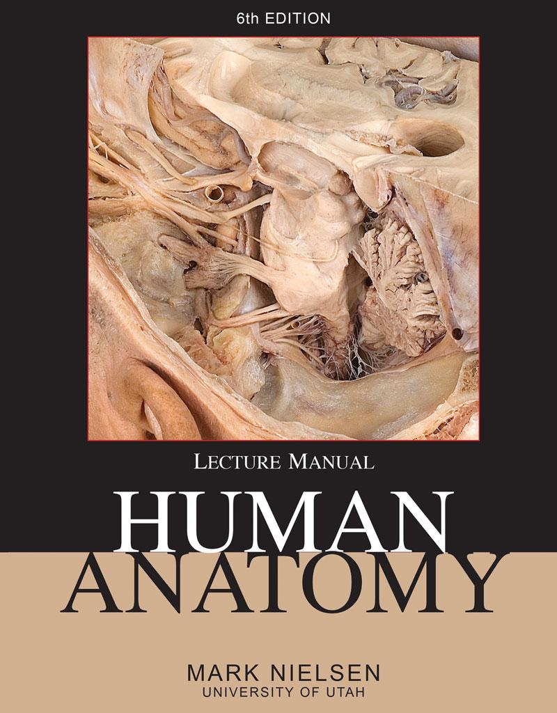 Human Anatomy Higher Education