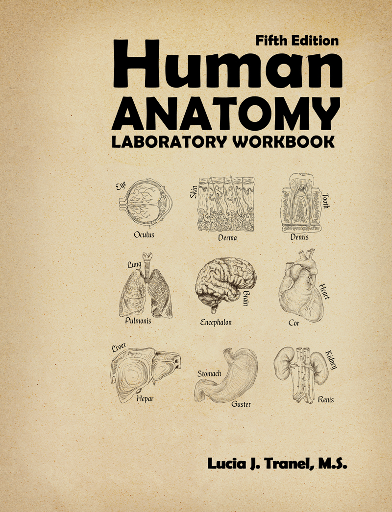 Human Anatomy Laboratory Workbook Higher Education