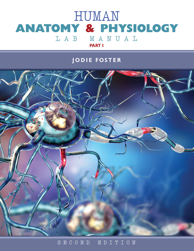 anatomy and physiology for the manual therapies