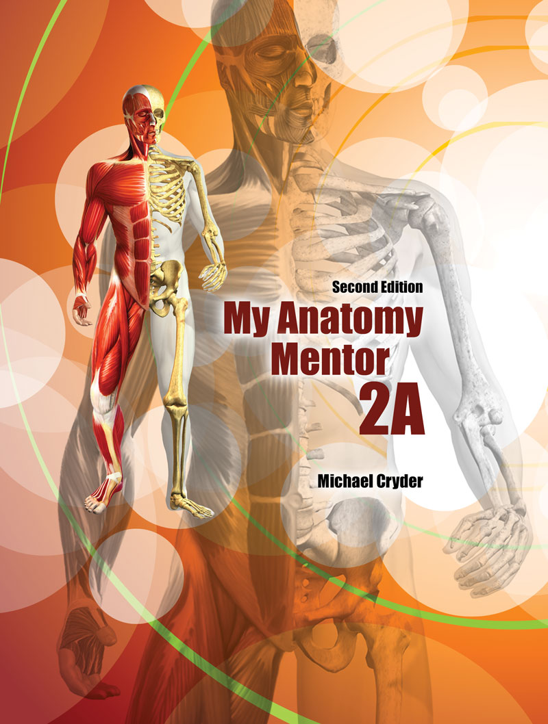 My Anatomy Mentor 2A | Higher Education