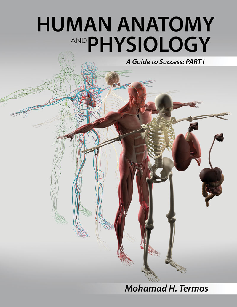 Human Anatomy And Physiology A Guide To Success Part 1 Higher