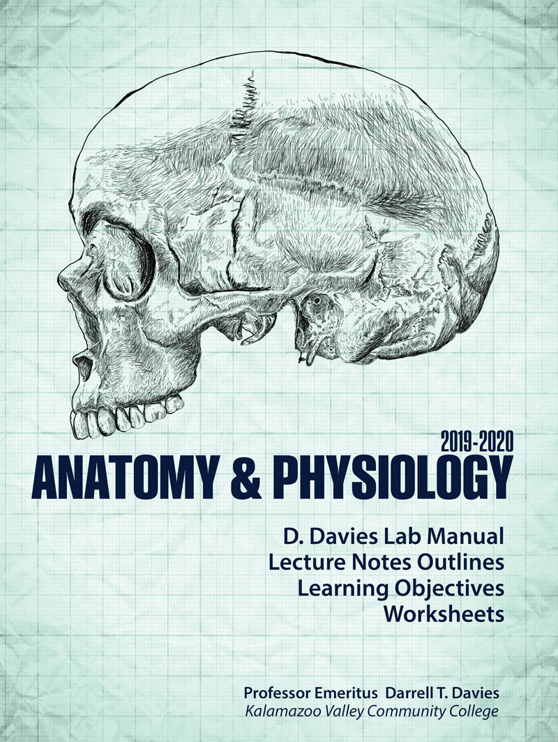 Anatomy & Physiology 2019-2020 | Higher Education