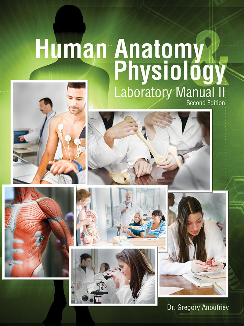 Human Anatomy and Physiology Laboratory Manual II | Higher Education