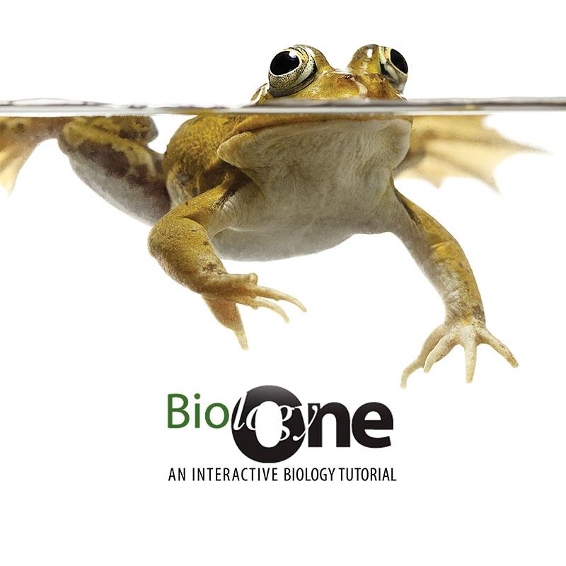 Biology One: An Interactive Biology Tutorial: Volume 1   Higher