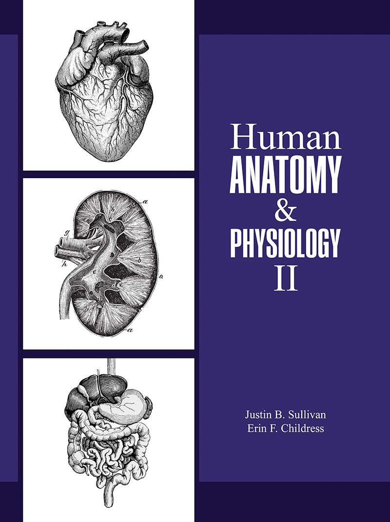 Human Anatomy and Physiology II | Higher Education