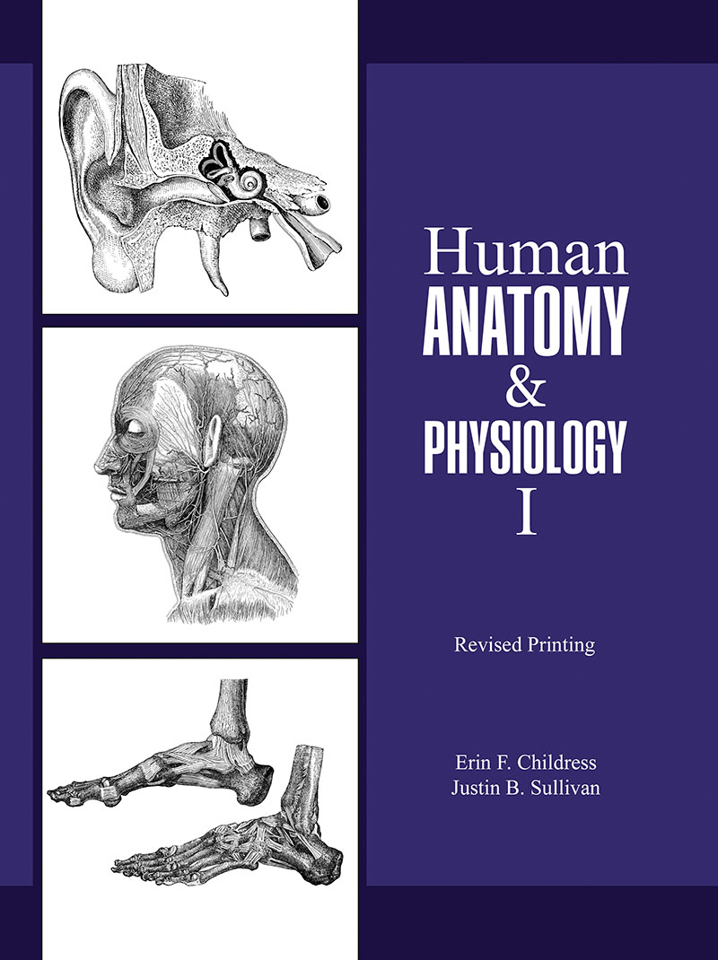 Human Anatomy and Physiology I | Higher Education