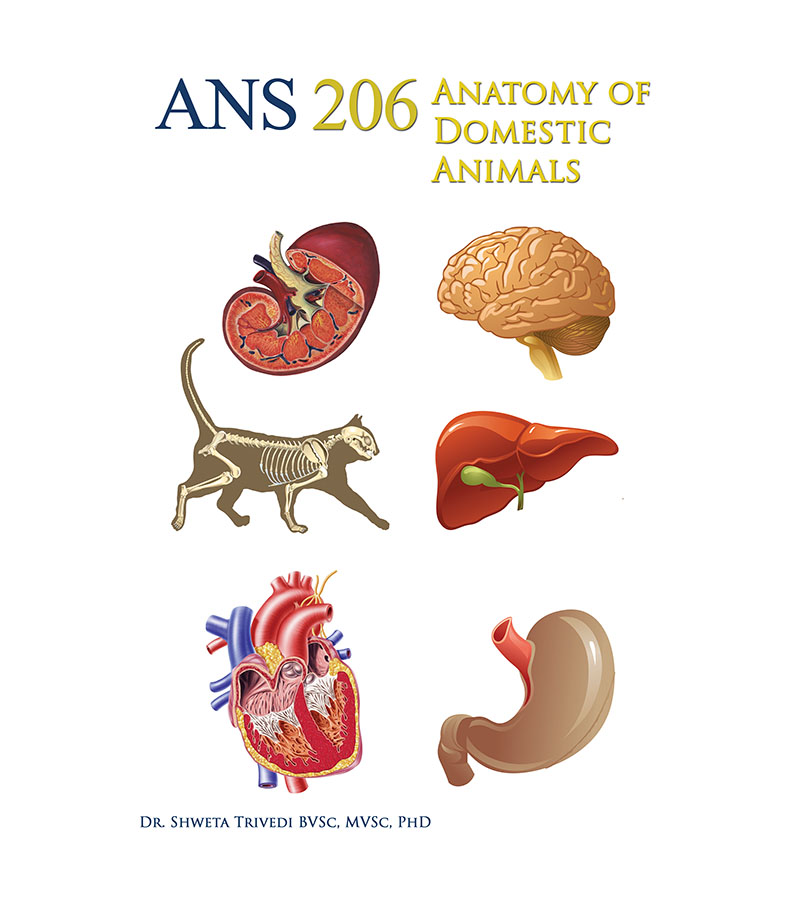 ANS 206: Anatomy of Domestic Animals | Higher Education